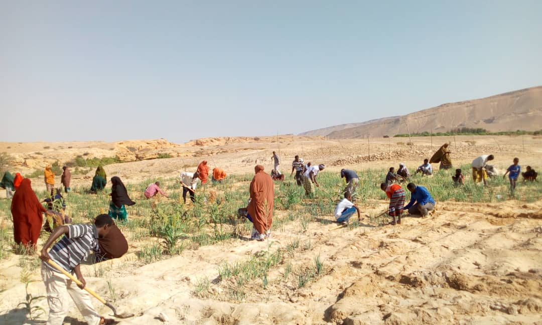 Asset Creation Project- PSA/WFP